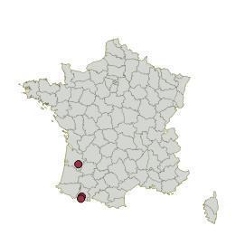 Common garden Pyrenees