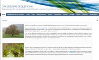 Oak genome