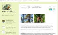 Pinus portal