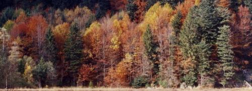 Des forêts mélangées pour lutter contre les insectes ravageurs