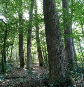 La génomique du chêne fait ses preuves