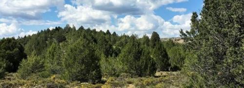 « Numéro spécial sur l'établissement des forêts secondaires dans les Annals of Forest Science »