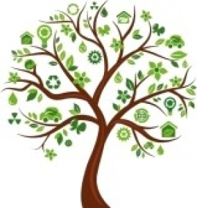 Collection d'arbre 2014