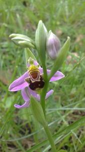 orchidée 2014 (2)