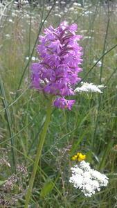 orchidée 2014 (5)