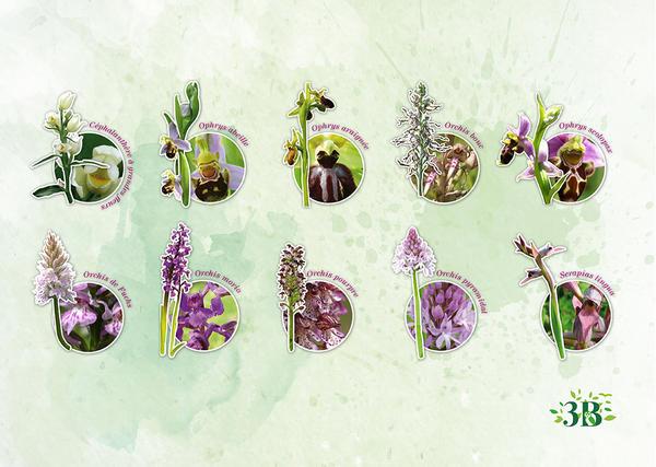 planche orchidée