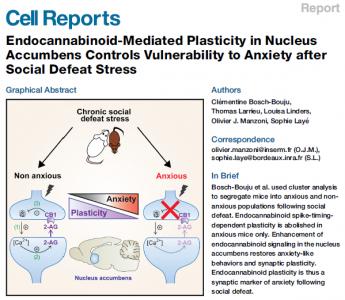 Cell Reports : Oméga 3 et gestion du stress, les liens se resserrent