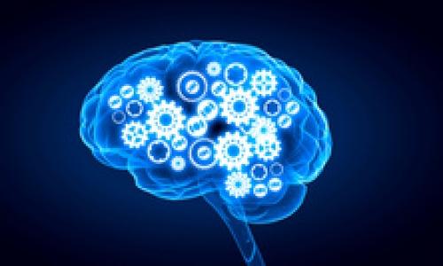Identification d'un mécanisme cérébral expliquant la mémoire associative indirecte