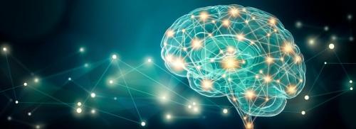 Lien entre nutrition et cerveau