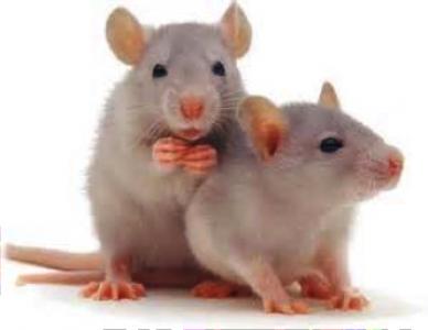 Animalerie et études de comportement
