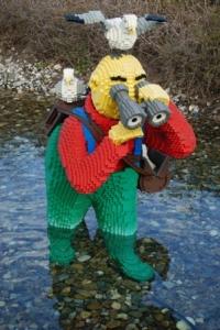 Seeking fish, oblivious to birds