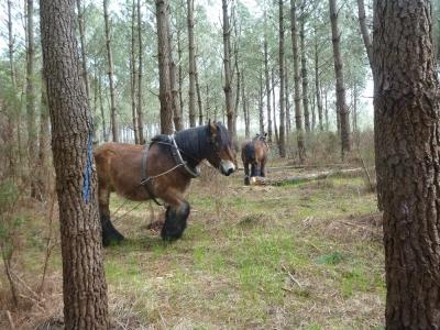 Debardage cheval