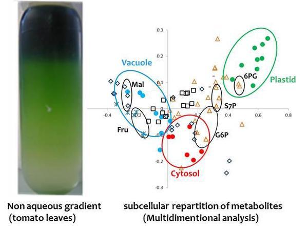 A non-aqueous subcellular fractionation experiment