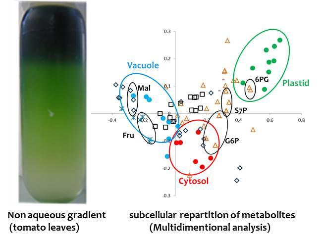 Expérience de fractionnement subcellulaire non aqueux