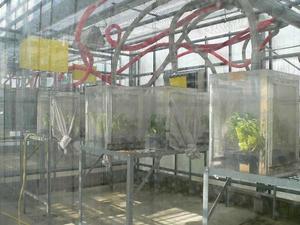Installations expérimentales : Serres et Chambres de culture