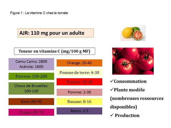 Vitamine C chez la tomate