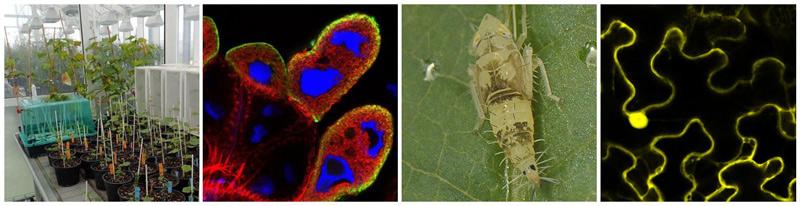 Axe 2 - Mollicutes