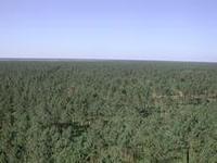 massif-forestier