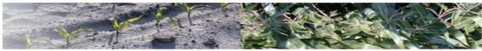 Biogéochimie des nutriments