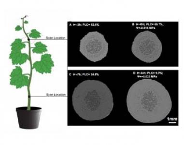 Article à paraître dans Plant Physiology