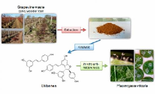 Article paru en mars 2017 dans J. Agric. Food Chem
