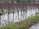 vigne-climat