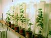 Elevage d'insectes sur plantes