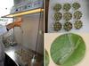 Inoculation de pathogènes sur disques foliaires