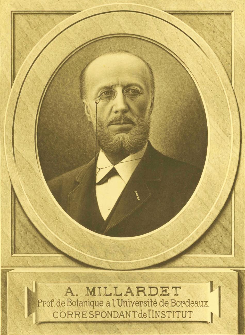 Portrait Millardet2