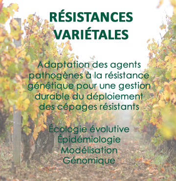 resistances varietales