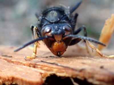 Article à paraitre dans Insect Science