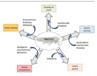 Article à paraitre dans Journal of Pest Science