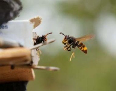 Article paru en mars 2017 dans J Insect Behavior