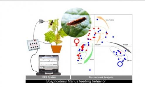 Article paru en octobre 2017 dans Journal of Insect Physiology