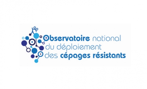 site internet d'OSCAR