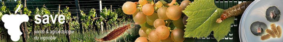 Santé et Agroécologie du vignoble