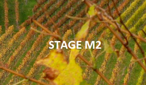 Offre de stage M2 ou équivalent 6 mois