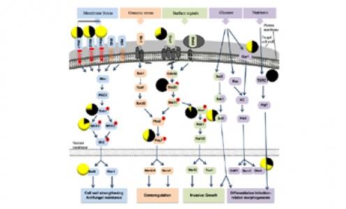 Article à paraitre dans Int. J. Mol. Sci.