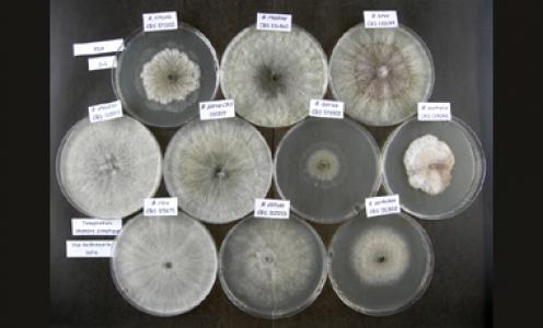 Article paru en aout 2020 dans Phytobiomes Journal